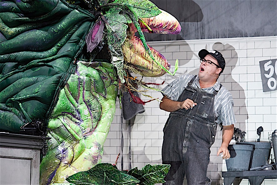 Brent Hill with Audrey II in Little Shop of Horrors, Melbourne 2016. Image by Belinda Strodder